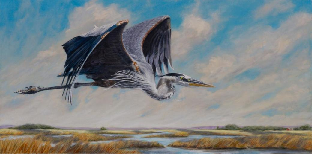 great_blue_heron_in_flightwebsite (1)