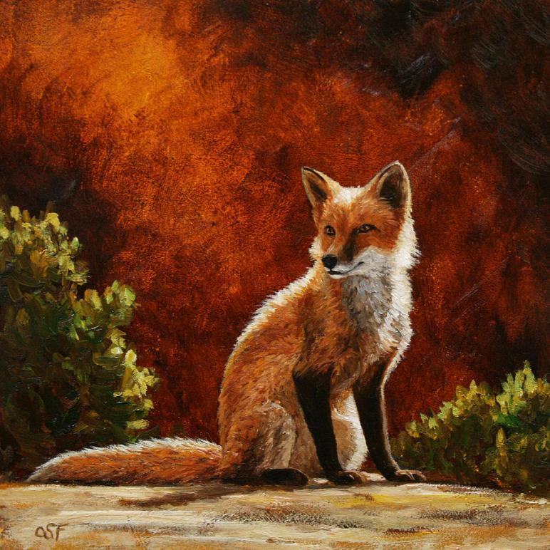 sun-fox-crista-forest